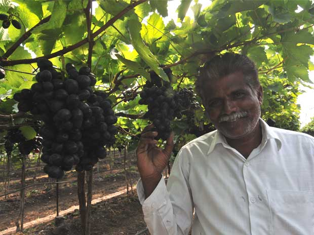 Image result for Farmers hit as grapes prices fall, N