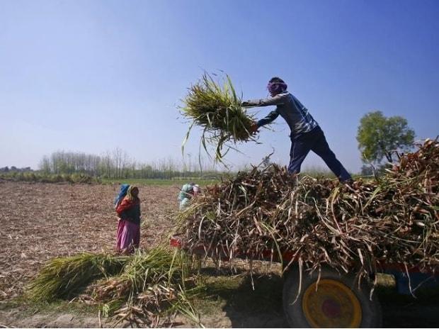 Workers unload stacks of sugarcane on a farmland at Sisola Khurd village in Uttar Pradesh