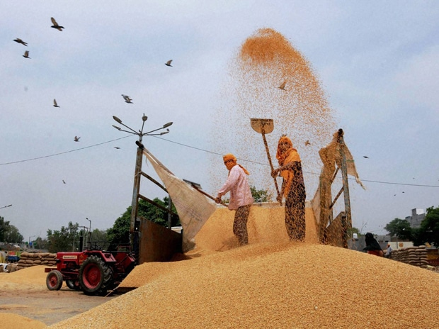 Farmers shifting wheat in a grain market in Amritsar, Punjab on Wednesday, 29 April 2015 Picture by PTI