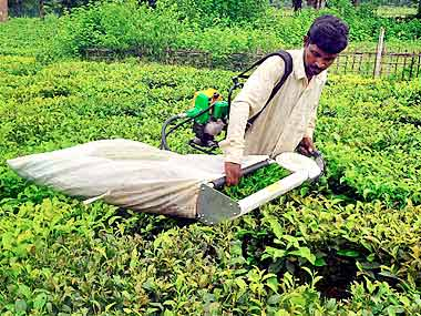 Indian tea exports to Pakistan can be doubled if quality improves, say Pakistan buyers