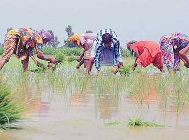 Chhattisgarh completes kharif sowing in 60% of targeted acreage