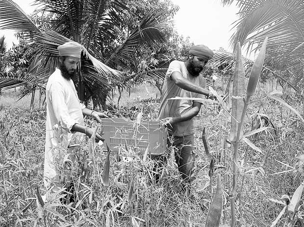 Farmers are tax exempt, so is company with Rs 215 cr profit