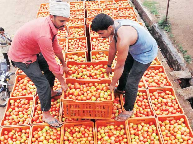 Govt to monitor tomato supplies from major producing states