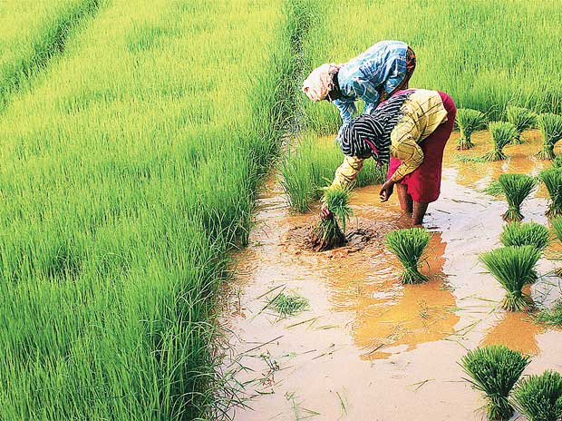 Improbable plans in a pro-farmer Budget