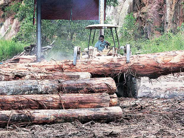 Maharashtra government takes back control of forest trade