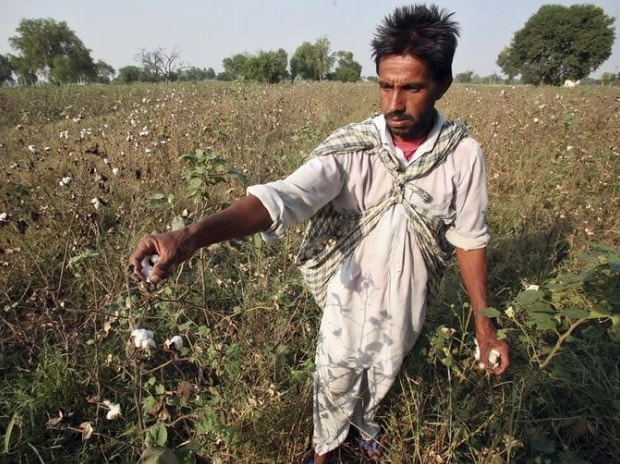 Bt cotton seed price unchanged for 2017-18