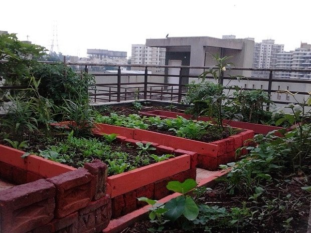 Can smart cities grow food the smart way