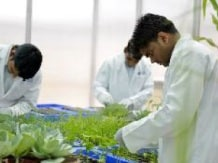 Insecticides India aims 15% top-line growth in ...