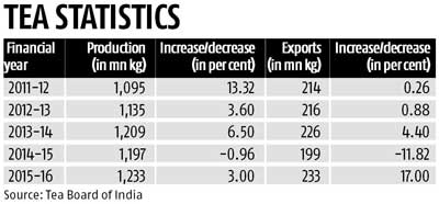 India records highest-ever tea production in 2015-16