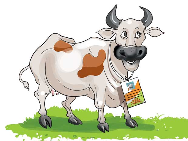 Holy cow! Cattle to get own Aadhaar cards