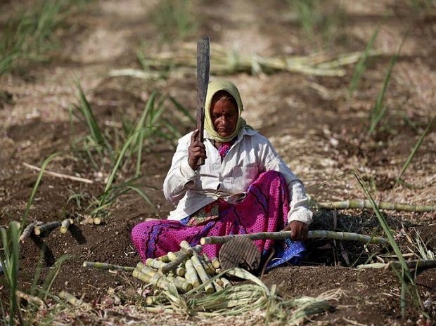 Parubai Govind Pawar, a 55-year-old female worker cuts sugarcane in a field in Degaon village in Solapur, in Maharashtra, India December 18, 2015