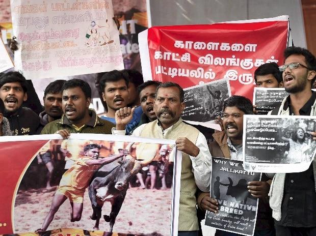 Jallikattu: Strikes,  blockades, procession as Modi dashes ordinance hopes