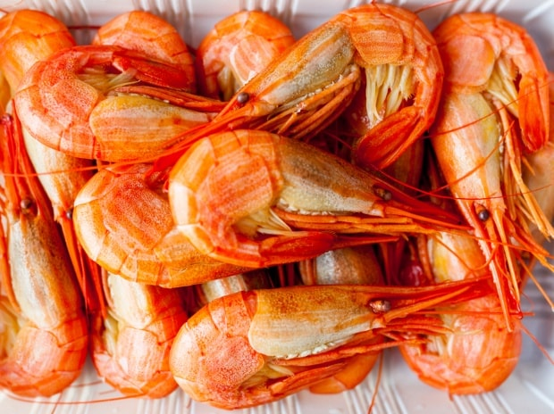 US duty hike unlikely to hit Indian shrimp exports: ICRA