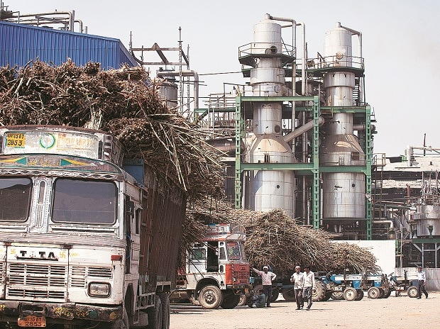 Sugar millers, Maharashtra, drought, plantation, sugar