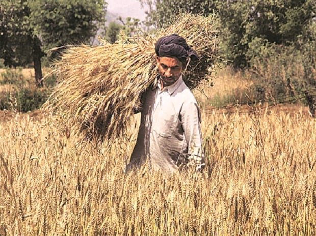 Farmer, Farm debt, farm loan waiver