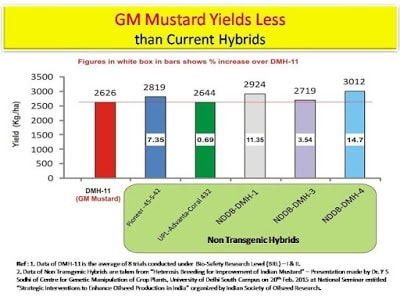 GM Mustard: Making a way for other GM crops?