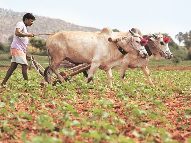 Telangana to have special farm budget, divide cultivable land into clusters