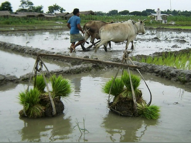 agriculture, crop, farming, monsoon