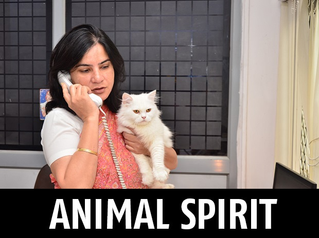 Gauri Maulekhi with her cat Sassy in her office in Shastri Bhawan in New Delhi. Photo: Sanjay K Sharma
