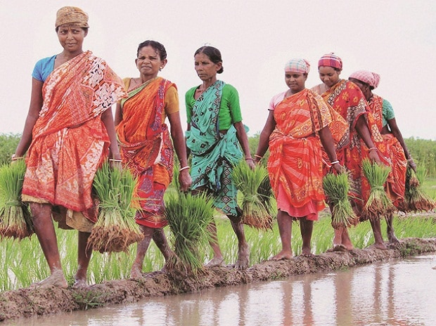 No unusual profit to private firms via crop insurance scheme: Govt