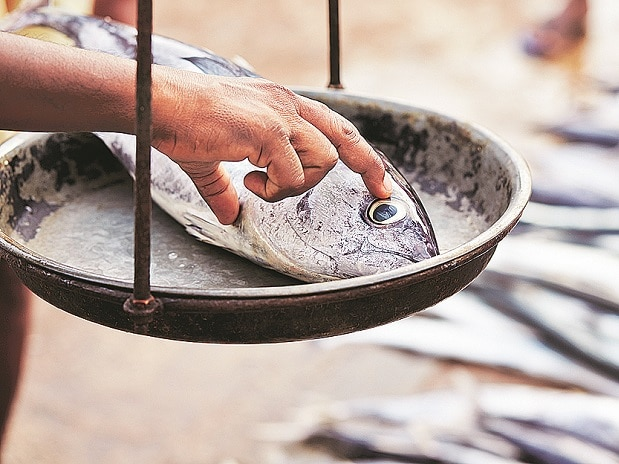 EU mulls ban on seafood from India