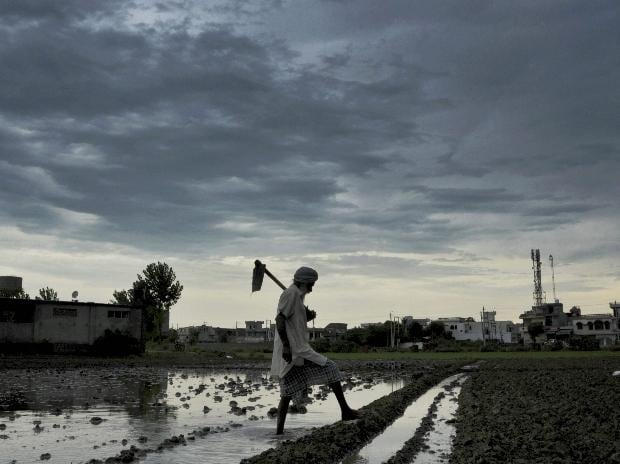 Rainfall deficit narrows to 3 % from 5% in last week: Morgan Stanley