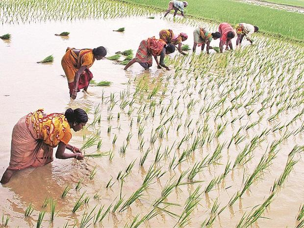 Chhattisgarh farmers to earn Rs 2,100 crore as bonus
