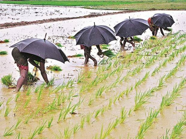 Monsoon, Farmer, Farm, Agriculture