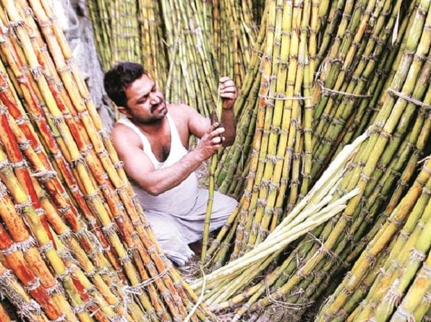 UP govt raises cane price by 3.3% in FY18