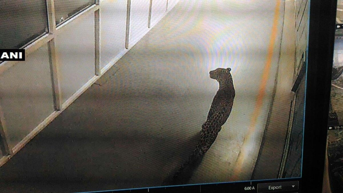 Morning shift scrapped as leopard enters Maruti plant in Manesar