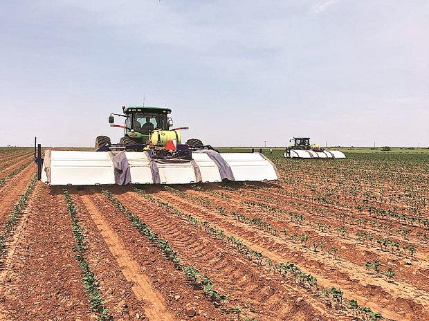 Blue River Technology, a Silicon Valley start-up, is using computer vision powered by Nvidia Corp to help lettuce farmers boost productivity and reduce or reallocate labour costs 	photo: blue river technology