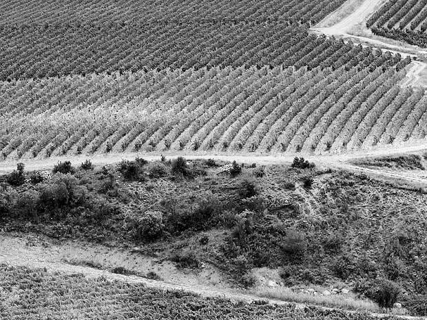 A vineyard owned by Torres in the Spanish Pyrenees. Photo: Bloomberg