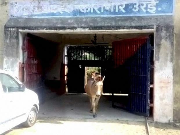 Horses, donkeys sent behind bars for damaging saplings in UP
