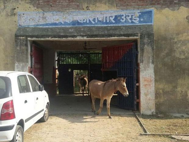 Donkeys jailed in UP for eating expensive plants, BJP leader sets them free