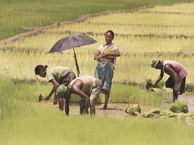 agriculture, farmers