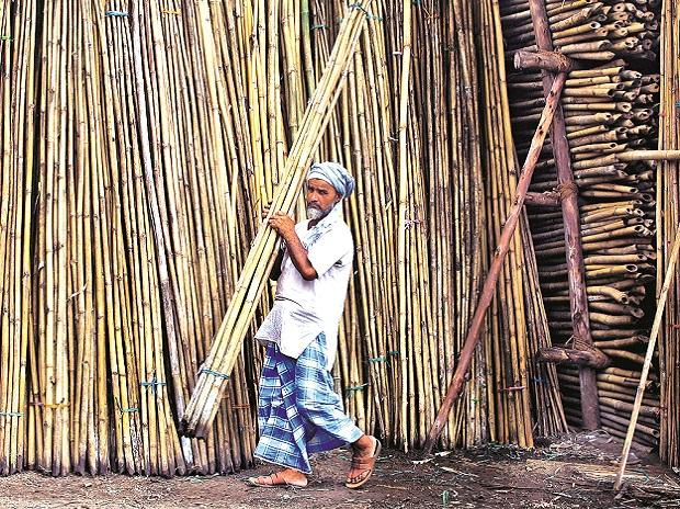 bamboo to ethanol  india u0026 39 s biofuel industry to explode into a  15 bn market