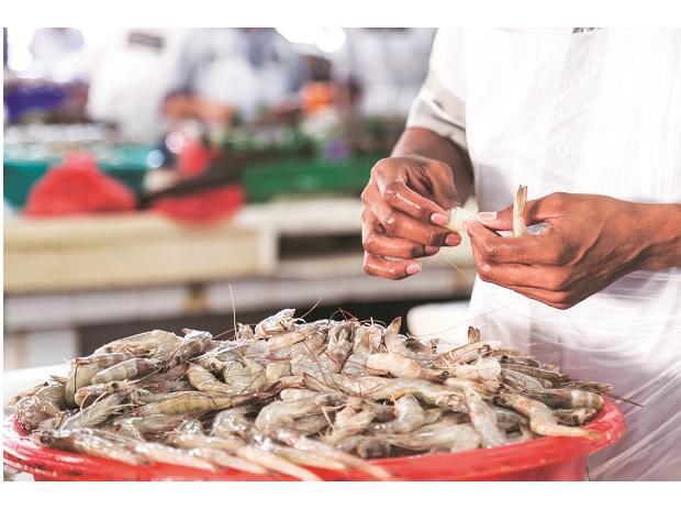 Strong orders to push up exports of shrimps