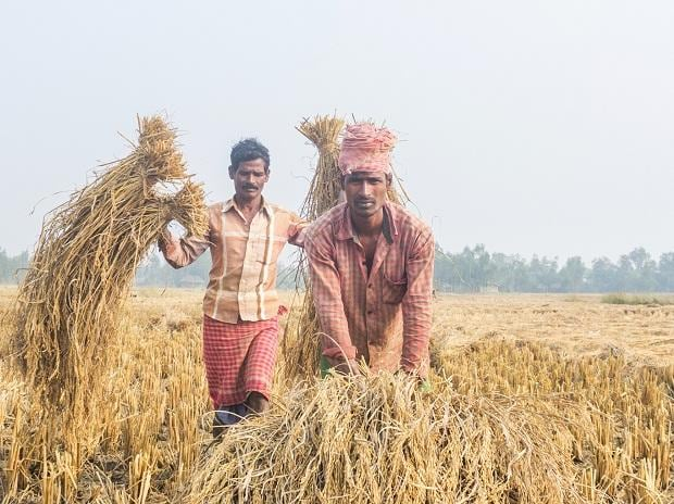farmers, agriculture