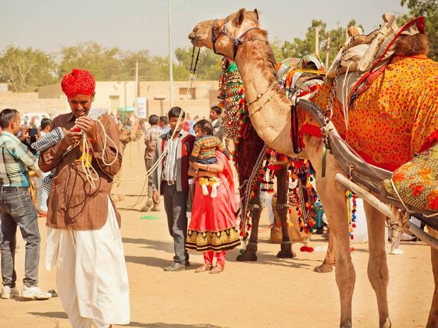 Internet, Rajasthan, Camel