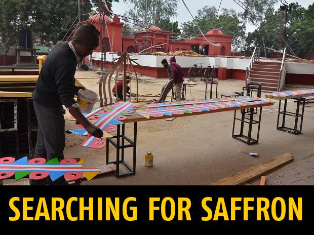 searching for saffron
