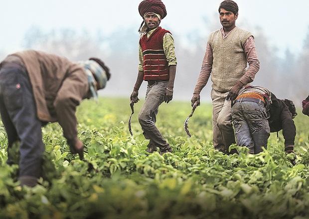 indian labourers