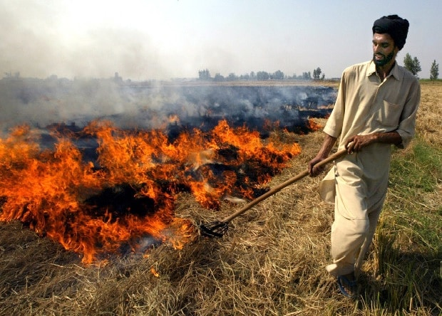 Punjab, Haryana farmers ignore ban on stubble burning