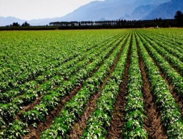 Fertiliser, agrochemical shares in focus; Zuari Agro zooms over 25% in two days
