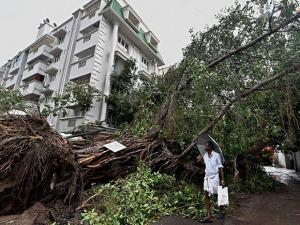 A man walks past a uprooted tree following the cyclone Vardah