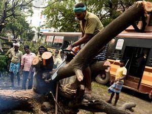 Nearly 8,400 corporation workers are working day and night to remove the uprooted trees