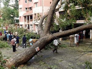 Residents look at the uprooted trees in a residential area which have been the worst hit due to the cyclone Vardah