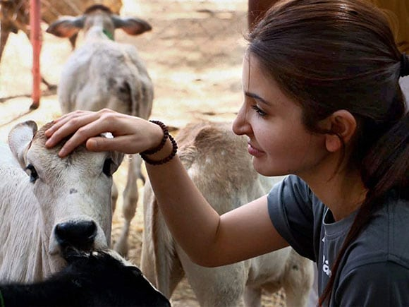 Anushka Sharma, Animal Aid Charitable Trust, NGO, Udaipur