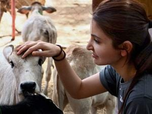 Anushka Sharma with a calf during her visit to Udaipur