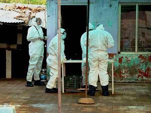 Animal husbandry doctors in bird-flu protected hazmat suits check samples