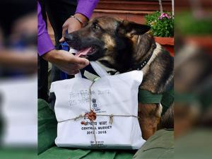 A security person with a sniffer dog inspecting the bundles containing the copies of Union Budget 2017-18 at Parliament